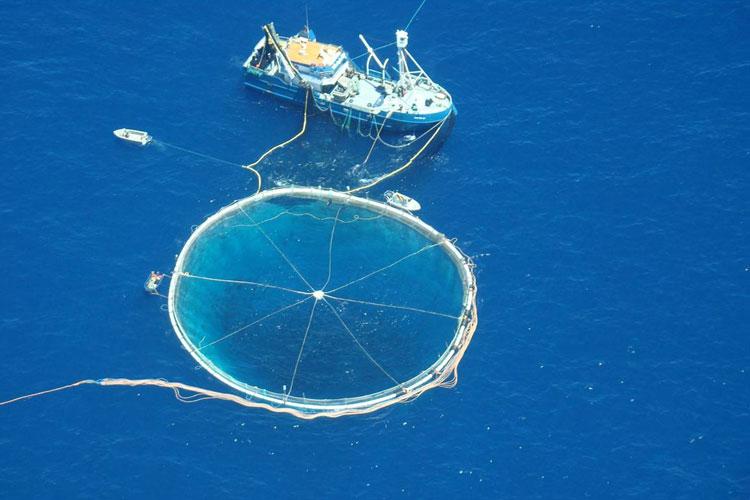 Tony 39 s tuna international responsible sustainable for Purse seine fishing